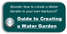 Guide to creating a water garden