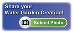 water garden photo gallery