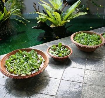 3 benefits indoor water gardens articles about ponds and water gardens workwithnaturefo
