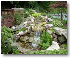 water garden picture
