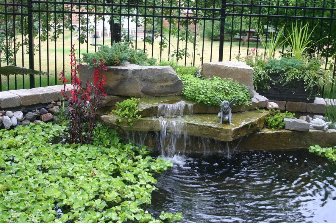 garden pond photo gallery